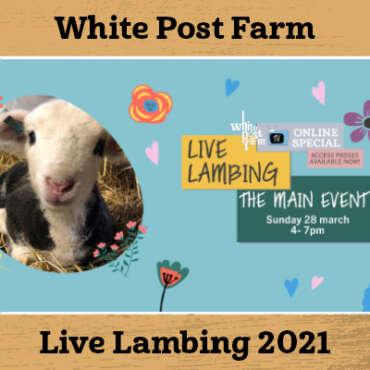 Live Lambing 2021!!!